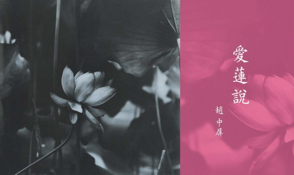 Love Lotus Essay